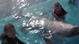 Египет. Купаемся с дельфинами, как Николь.  ( Vladimir swims with the dolphins )