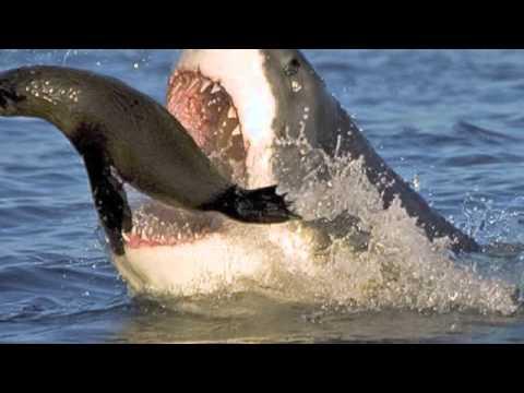 Evolution of Sharks - YouTube