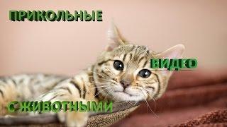 Приколы про животных - кошечки. Смотреть приколы про животных