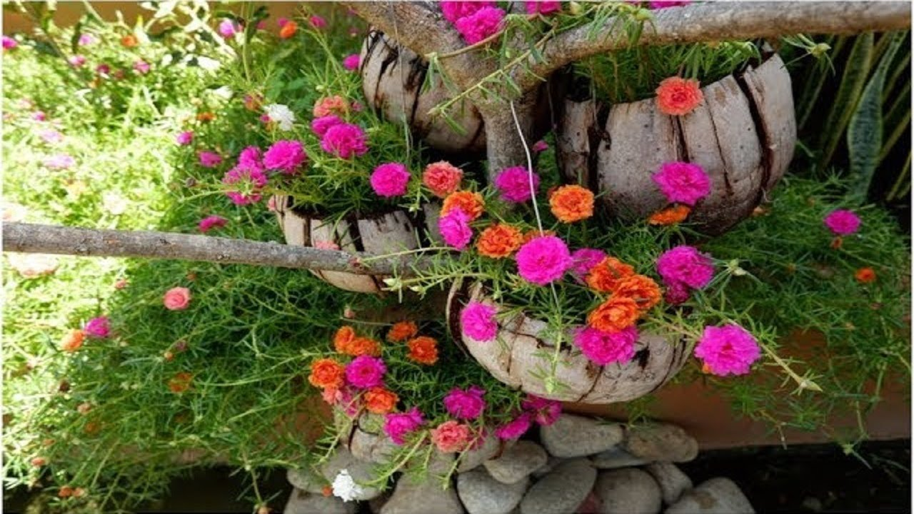 How To Grow Moss Rose Portulaca Grandiflora From Cuttings On