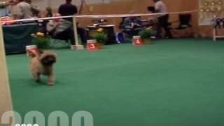 Cairn Terrier Zalazar Van Damme Best of Breed