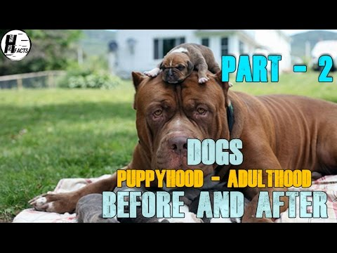 PART -2 | DOGS. Puppy - Adult | BEFORE AND AFTER