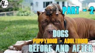 How dogs look in puppy and adult hood DOGS Cairn TerrierCairn Terri...