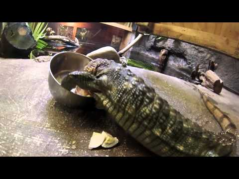 Reptile Lunchtime at the Palm Beach Zoo & Conservation Society