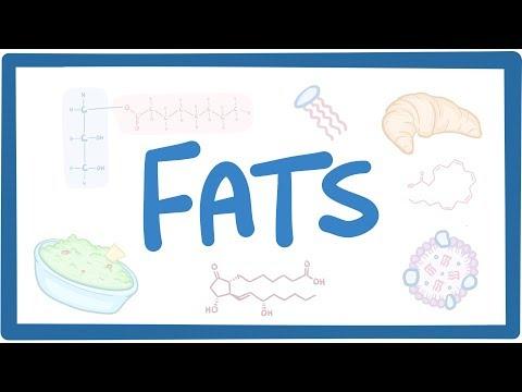 Fats biochemistry