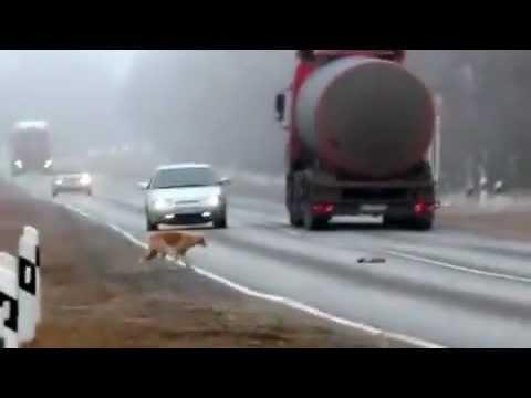 Дикие лошади Ростовской областииз YouTube · Длительность: 3 мин58 с
