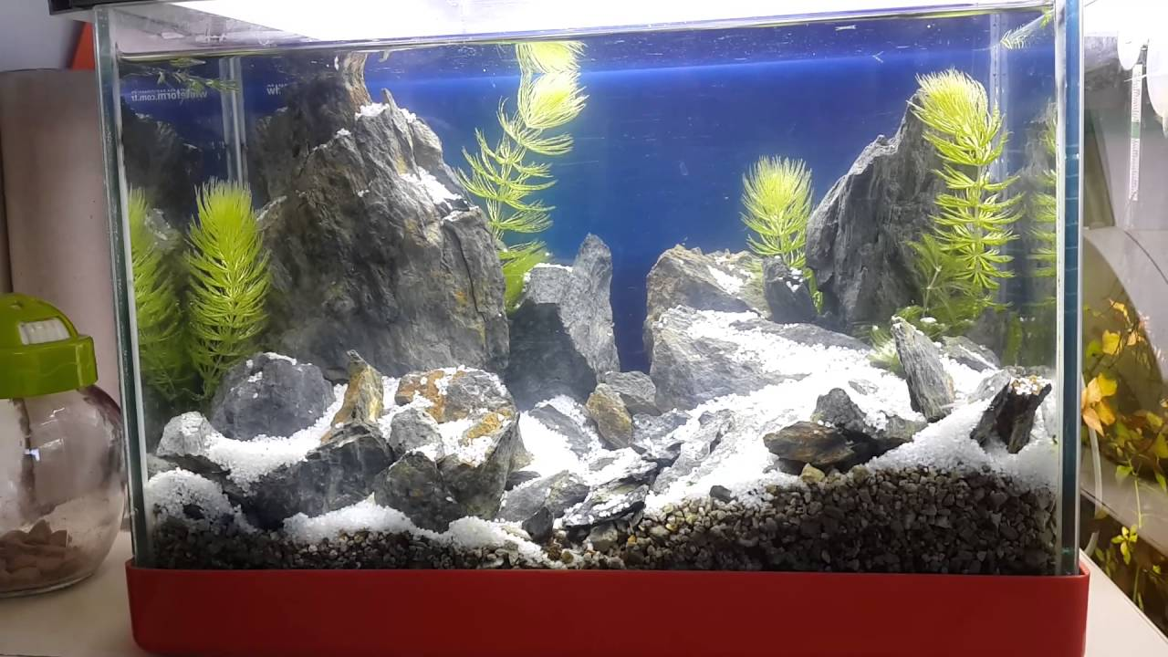 My Aquascaping Snowy Mountain