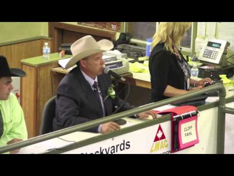 Cattle auction caller