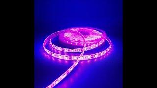 Đèn Led dây trang trí chíp led 5050 12V Ngoài trời Màu Hồng- Kimphongled