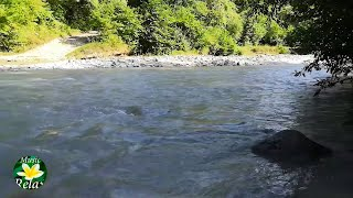 8 часов расслабляющих Звуков Реки - Звуки Природы и Леса, Пение птиц