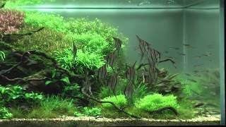 The International Aquatic Plants Layout Contest 2012 No.59 koji Nakamura