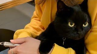 4匹の黒猫ボンベイファミリーの日常の風景です。 今回はベニスの爪をお姉ちゃんが切ってくれました。 爪切りが大の苦手なベニスの後ろ足の爪を切ることができたなんて ...