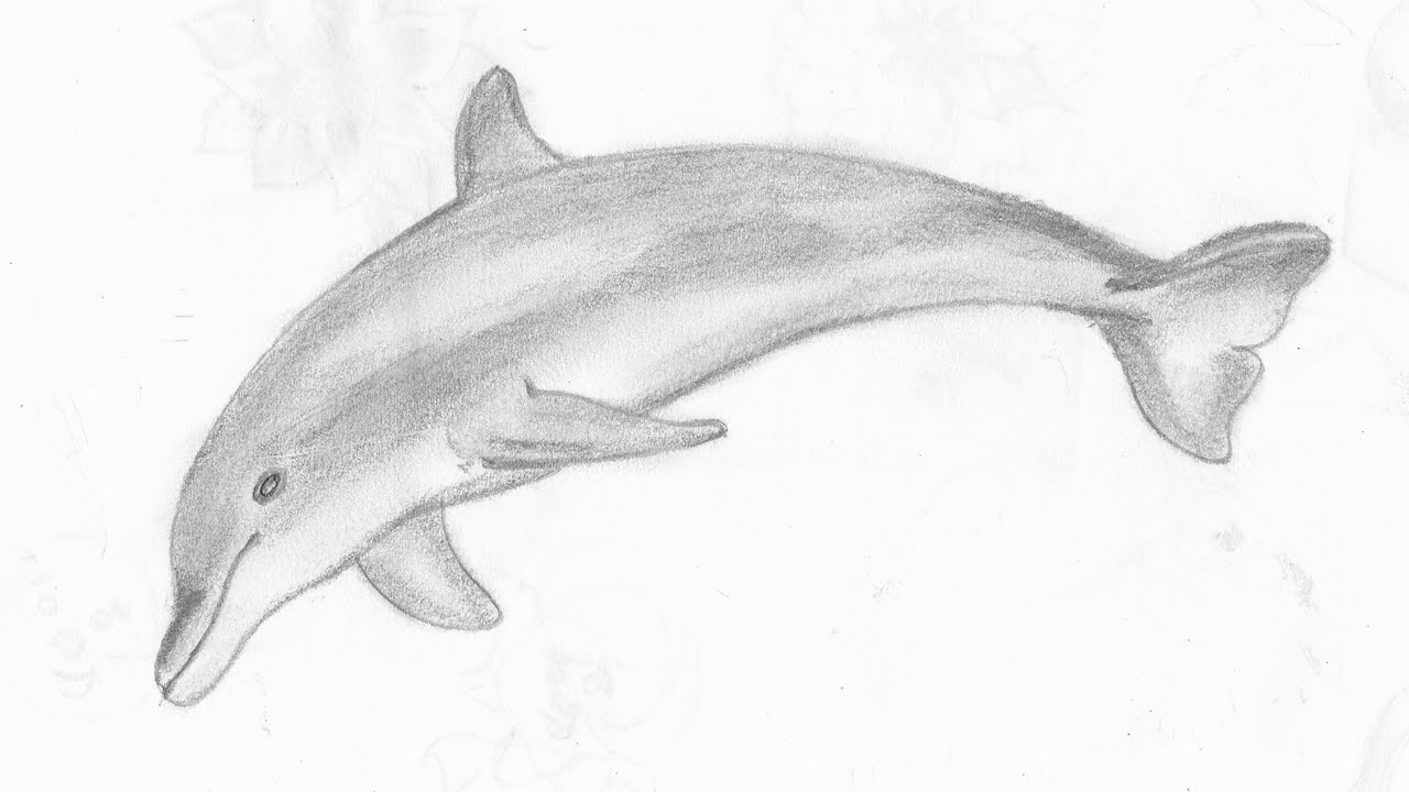 Uncategorized How To Draw A Good Fish how to draw a dolphin youtube