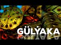 Türkmen film - Gülýaka