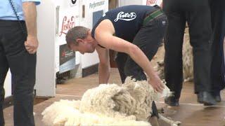 Gwellau Masnachol Agored Rhag 2 | Commercial Blade Shearing Pre 2