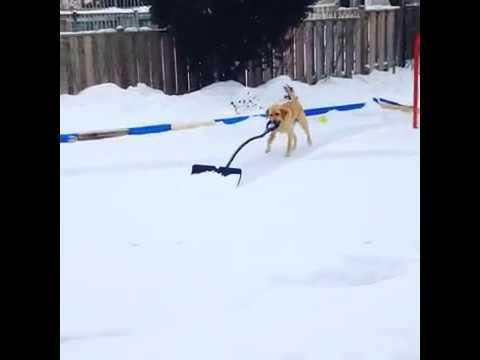 Smart dog wow impressive!!!!