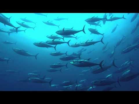 Farming Tuna In The Mediterranean | Malta | Salt Nomads