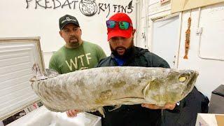 monster-fish-graveyard-in-freezer-box-shocking