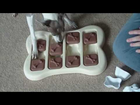 Dog Food Puzzles - Sophia the Italian Greyhound Gets Challenged