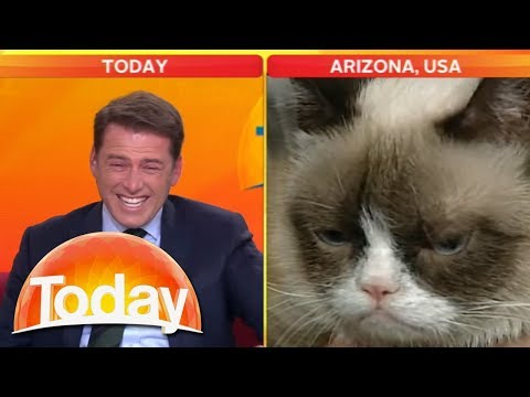 Grumpy Cat VS Karl Stefanovic