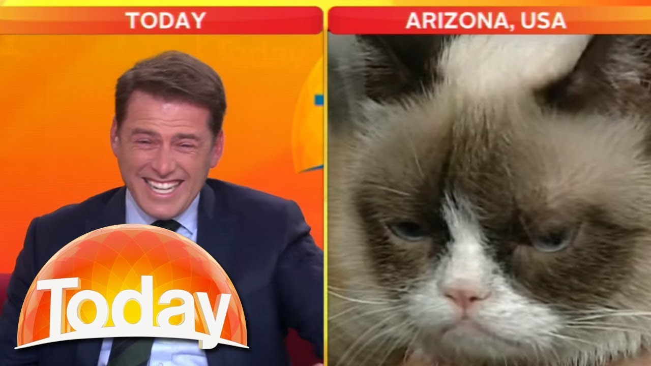 Youtube Grumpy Cat Today Show