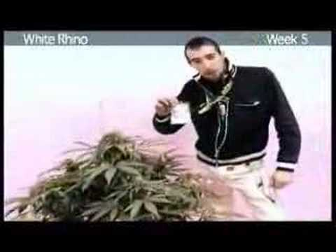 Green House Seed Co. Ultimate Professional Grow DVD - Part 1