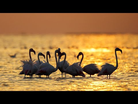 Wetland nature sounds | Keurbooms Lagoon, Plettenberg Bay, South Africa - Relaxing sunset noises