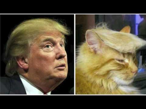 Donald en de Mexicaan - Van poesjes