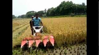 Rice Harvester ধান কাটার মেশিন