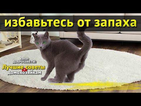 Вопрос: Почему запах мочи кошки жжёт глаза?
