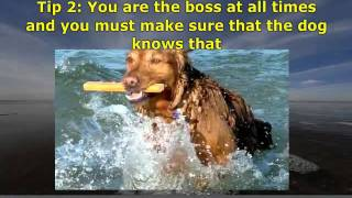 New Video_ Dog Obedience Training Tips Watvh Now!.flv