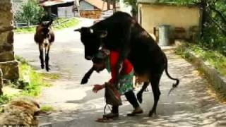 animale  bizar par   malaykath@yahoo.fr