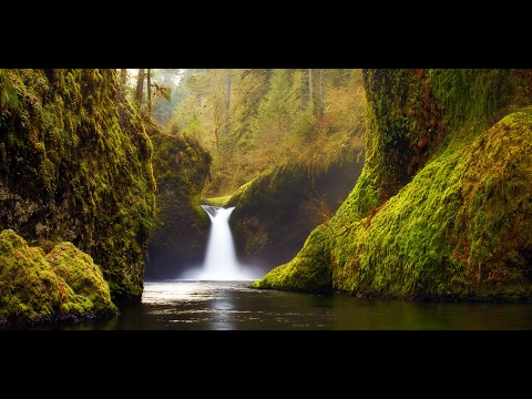 "Relaxing Music: Peaceful Music, Instrumental Music, ""Nature's Sanctuary"" by Tim Janis"