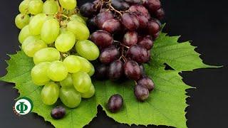162 Виноград – как лекарство