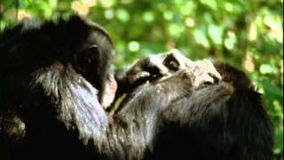 Evolution - Part 5 of 7 - Why Sex? (PBS Documentary)[HD 720p]