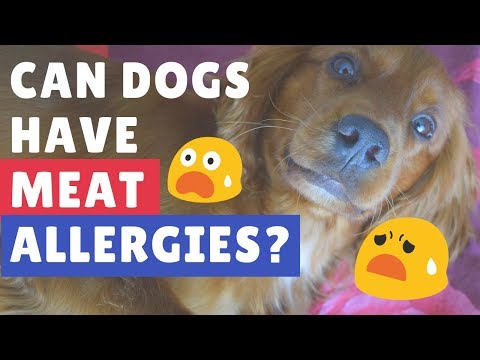 Can Dogs Have Meat Allergies?