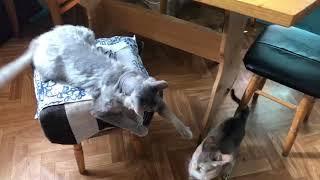 Кто или кот в доме хозяин? /Воспитание на уровне. /Мои коты /Кот и сумка🤣