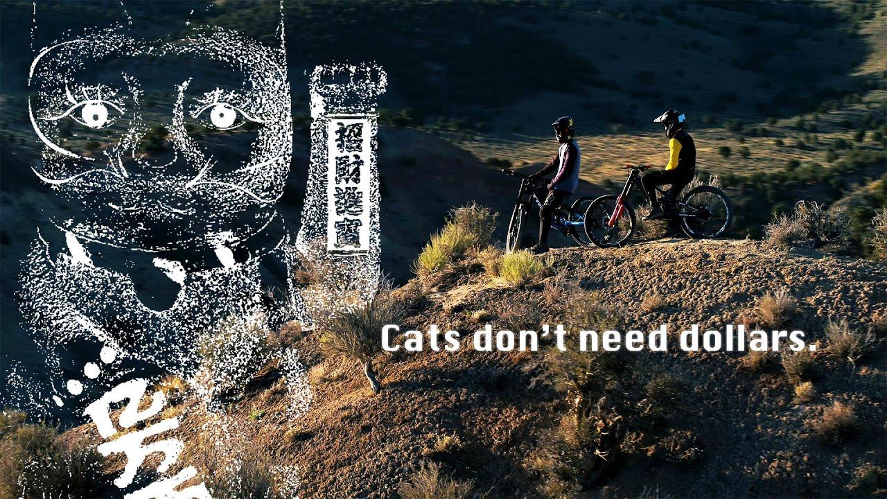 Cats don't need dollars