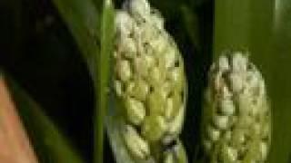 Kurious Oranj - The Fall - Garden Grows April/May 2008