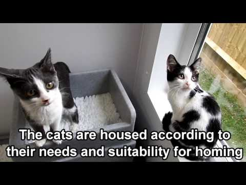 Cats Protection Haslemere Adoption Centre Youtube