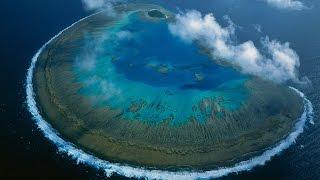 La Grande Barriera Corallina è più grande barriera corallina del mondo, ha una grande diversità