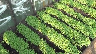 Грядки-короба, мульчирование, сидераты(Грядки-короба, мульчирование, выращивание сидератов, отказ от перекапывания почвы с оборотом пласта, приме..., 2014-09-22T16:12:06.000Z)