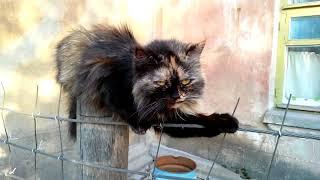 Говорящие коты! Лучшая подборка, КОТЫ ПРИКОЛЫ 2020 - СМЕШНЫЕ КОТЫ - Funny Cats ТОПОВАЯ!