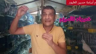 فائدة الخميرة للطيور وأضرار كثرة استخدامها م أسامة  حسين