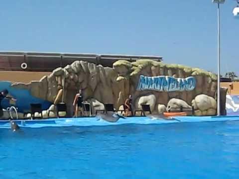 Spectacol Delfini Marineland Palma de Mallorca 5 oferit de hobby-zoo.ro