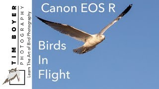 Canon EOS R For Birds In Flight Photography