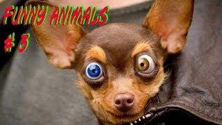 #03 FUNNY ANIMALS - Приколы с животными №03