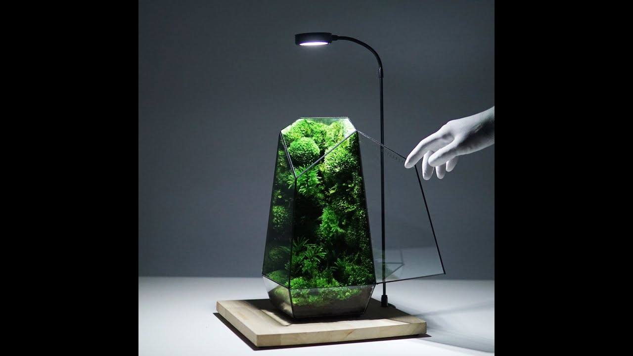 Extremely fresh looking preserved moss in the Vertex Terrarium by TerraLiving