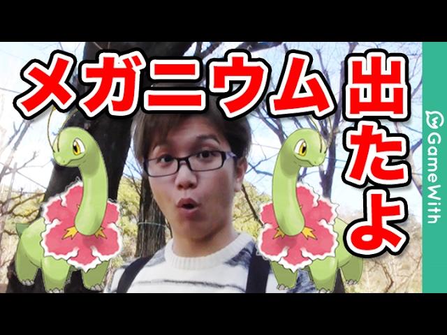 【ポケモンGO】えっメガニウム出ちゃった!!頼むから逃げないでー!【Pokemon GO】