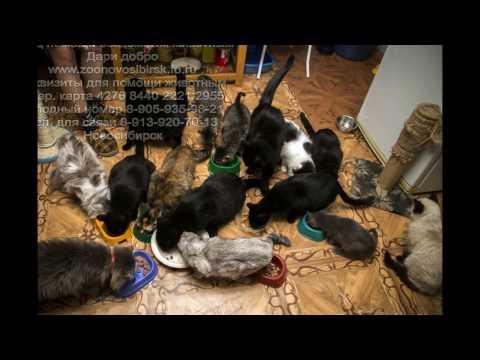 Подарки животным в приюте Dari dobro от Лавки квестов Novosibirsk